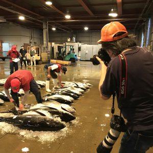 魚市場のセリの様子