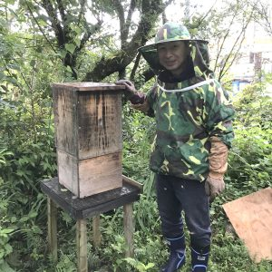 蜂蜜の収穫